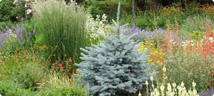 Companion Plants For Ornamental Grasses