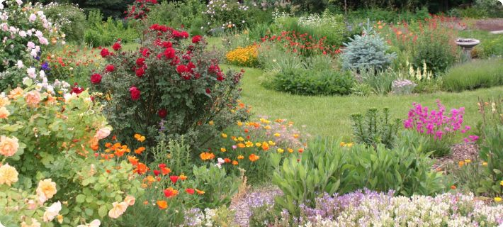 cottage garden seeds