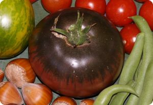 tomato black from tula