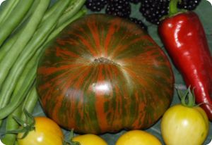 Tomato 'Chocolate Stripes'
